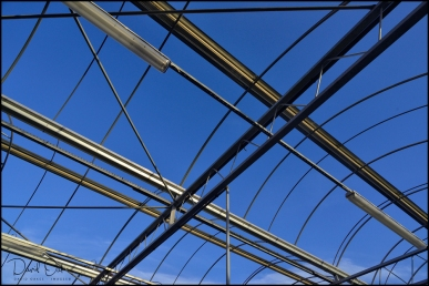 Glass-House-Roof