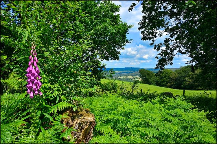 Stanton-Moor-Edge