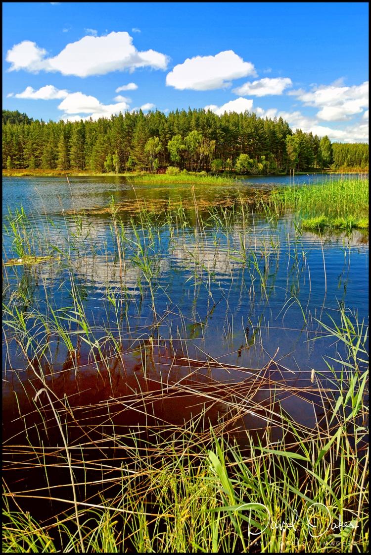 58 Uath Lochans, Farleitter, Glen Feshie,Cairngorms, Scotland 0721