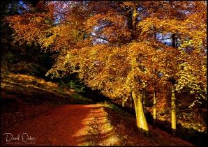 Derwent-Valley-Gold