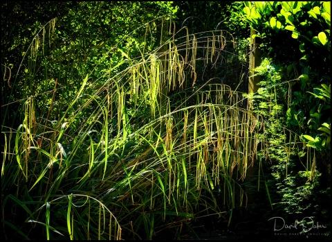 Long Grasses a