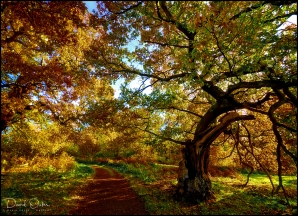 TREES-AUTUMNAL-COLOUR-AA-Print-0005