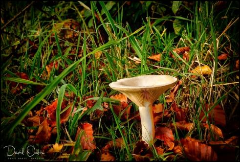 Autumnal sign 2