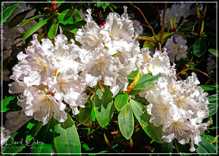 Lea-Gardens--04152.jpg