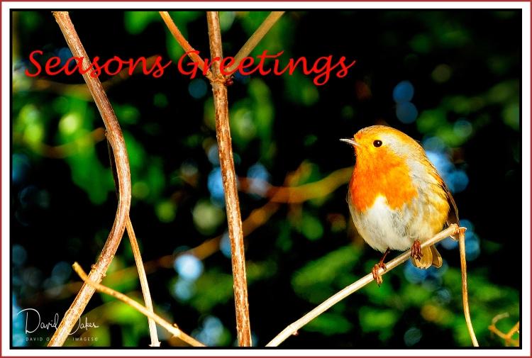 ROBIN-Greetings