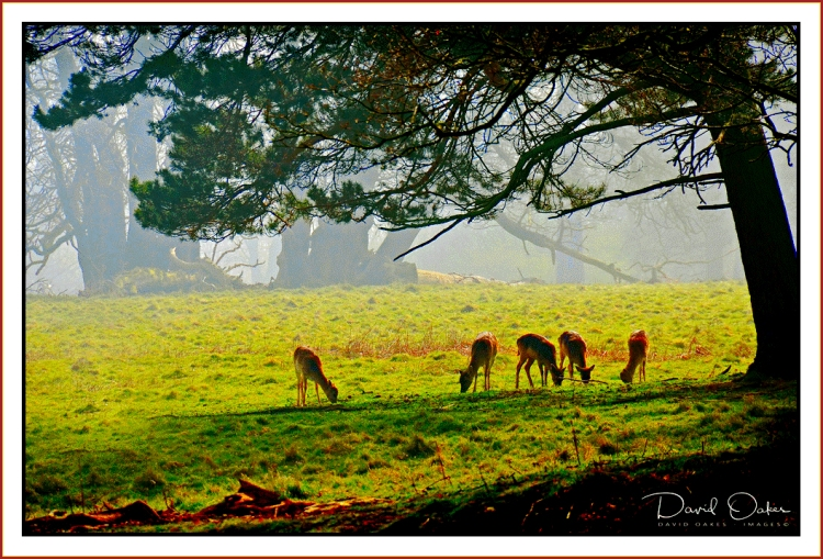 Deer-at-Dawn..
