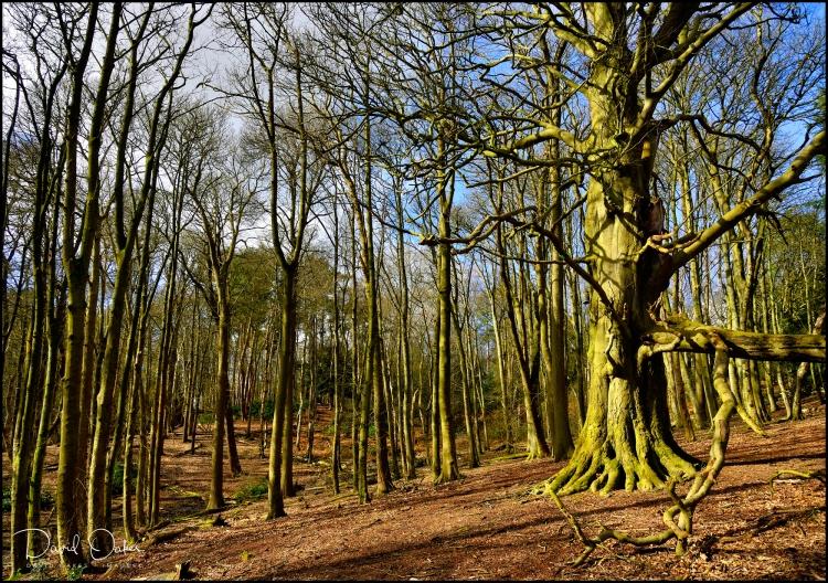 Woodland-Sunshine-2.3.20