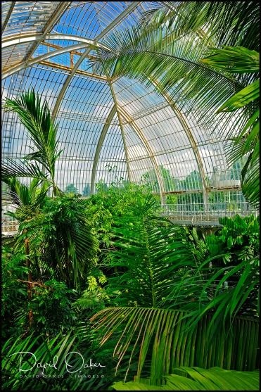 Kew-Palms
