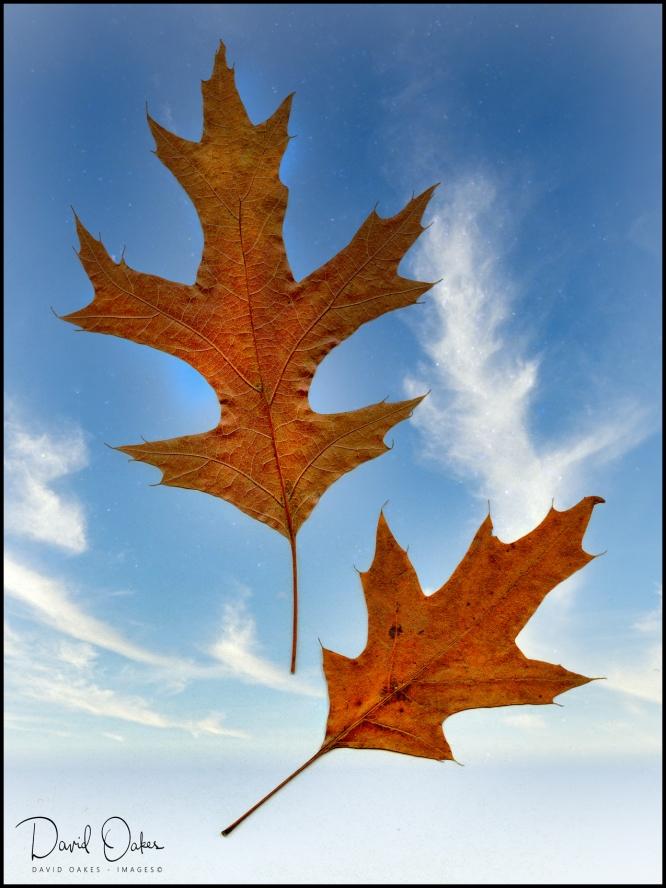 Leaf100-on-sky