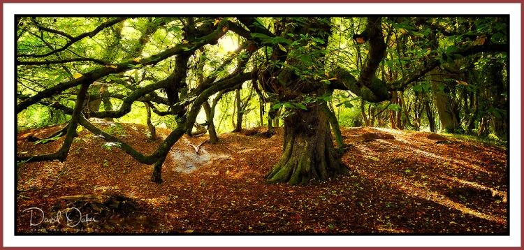 Chestnut-canopy2