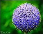 Blue-Ball-s