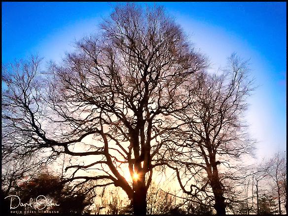 Winter-sun-rise
