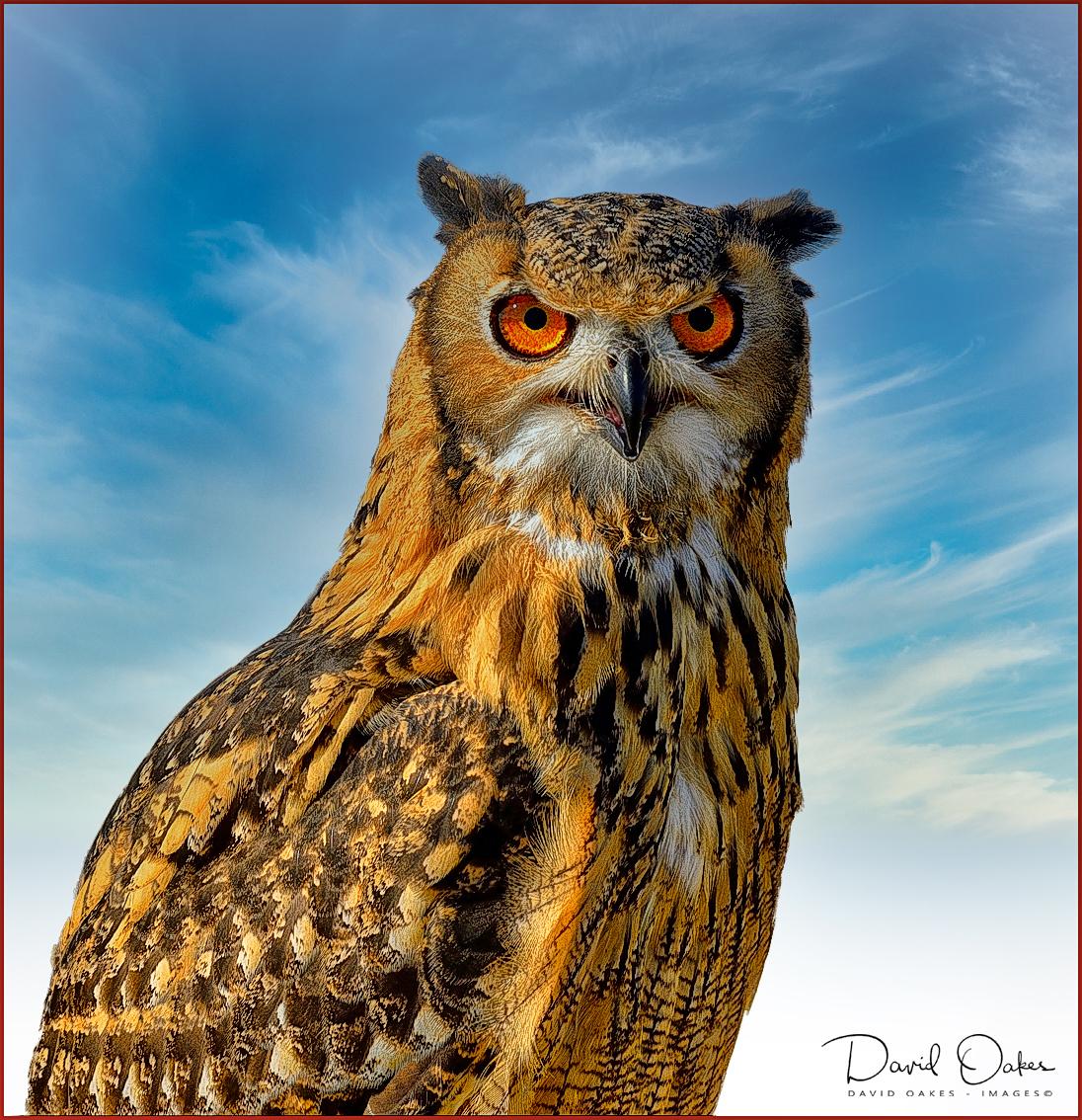 Wize-Owl-2