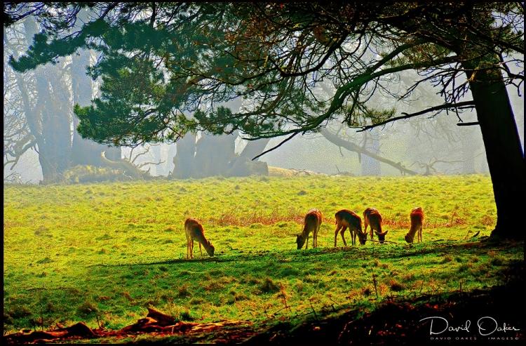Deer-at-Dawn..