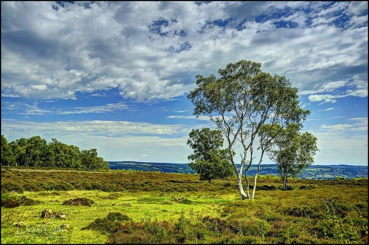 Stanton-Moor-Silver-Birch