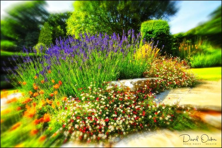 Lavender-Steps-print-(2)