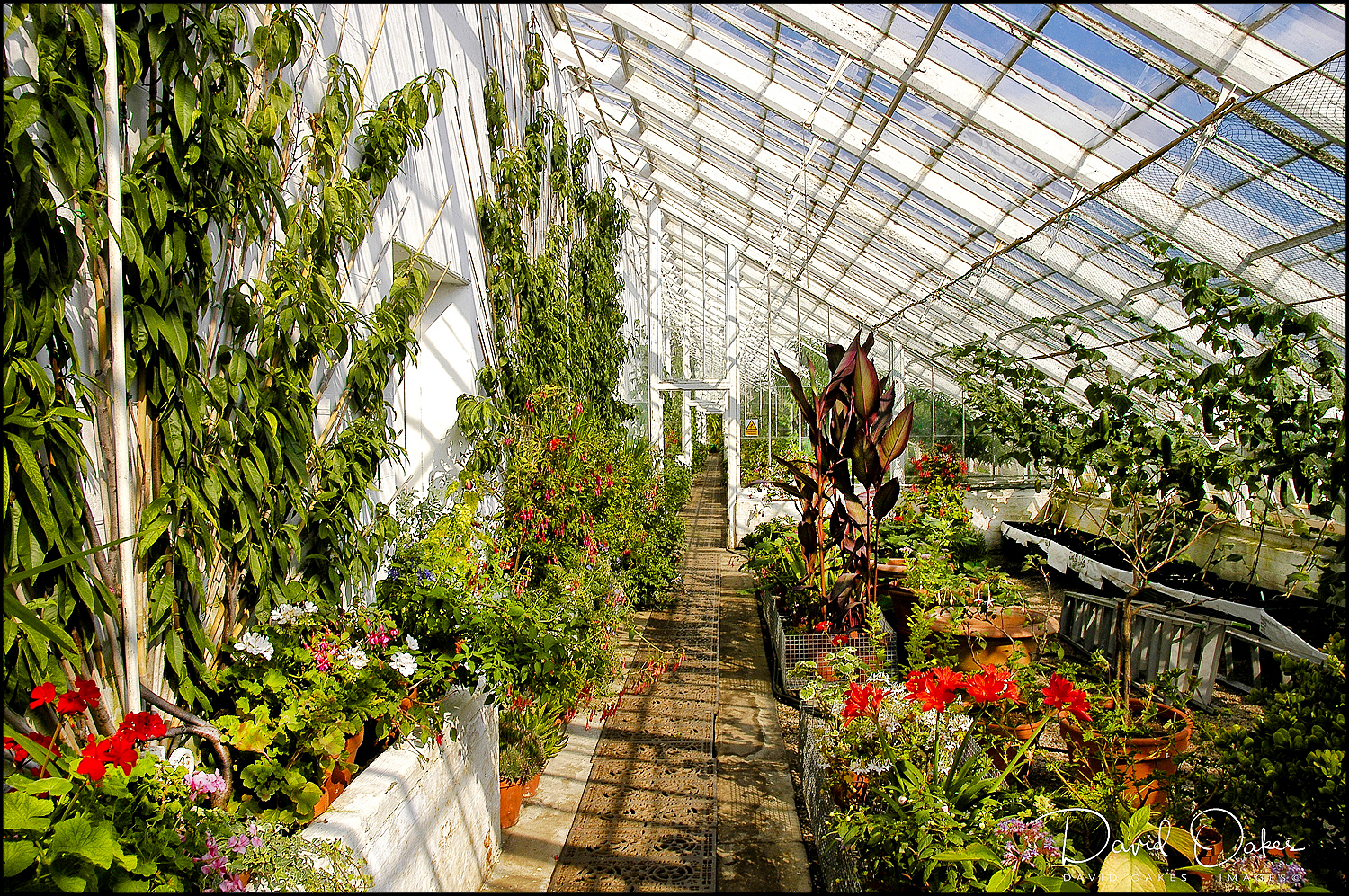 The Long Glass Houses in the Kitchen Garden @ CLUMBER PA (1)
