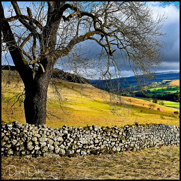 Yorkshire-2010--_0180sm