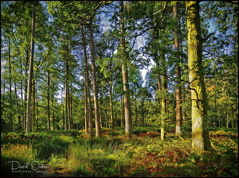 Manesty-Woods