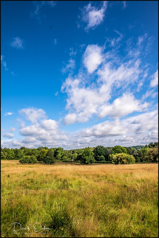 Summer-Meadows